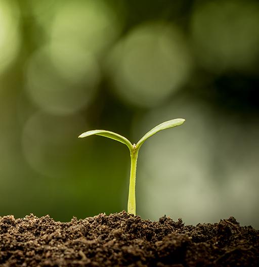 Planta som växer