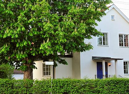 Villa och trädgård